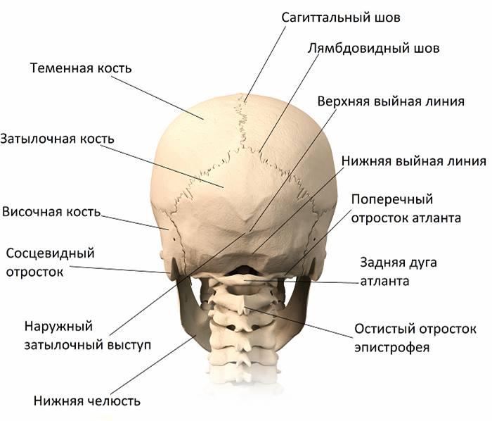 запорожье.череп
