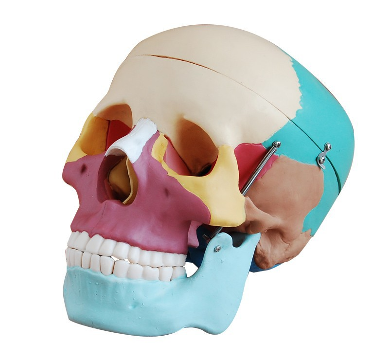краниосакральная терапия череп