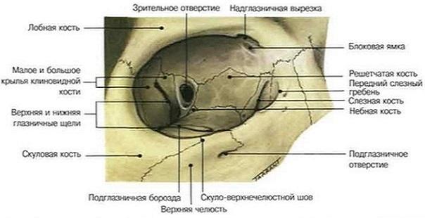 стенки глазницы