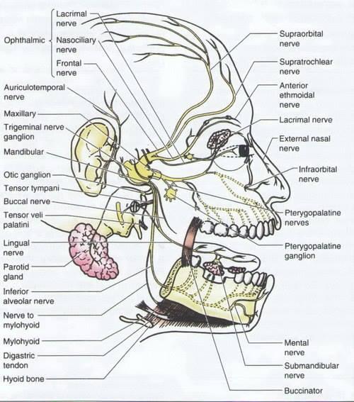 тройничный-нерв