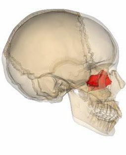Решетчатая кость