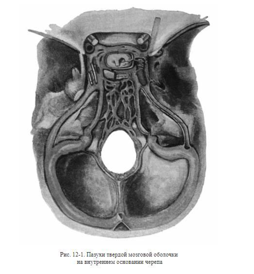 внутреннее основание черепа