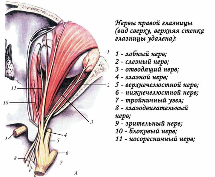 Отводящий нерв