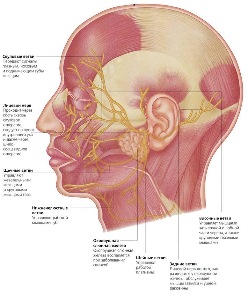 Лицевой нерв