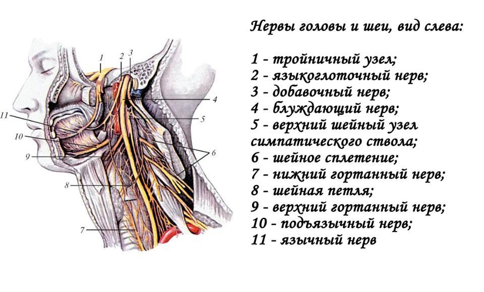 Языкоглоточный нерв